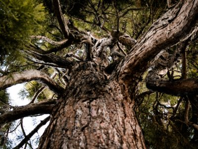 Meditando Abajo de un Árbol